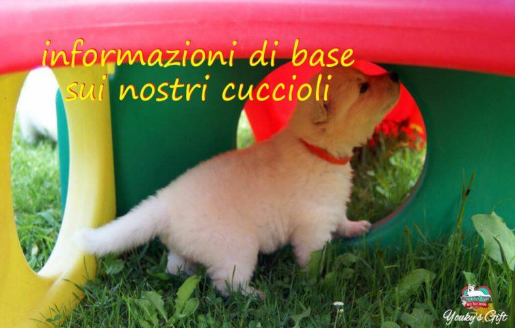 informazioni base sui cuccioli