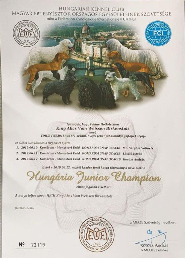king-abas-vom-weissen-birkenstolz-hungaria-junior-winner cuccioli allevamento pastore svizzero Youky's Gift