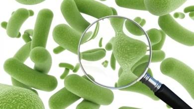 Photo of Probiotyki
