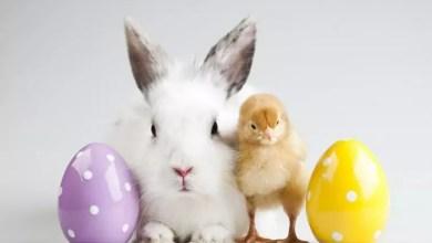 Photo of Wielkanoc na świecie.