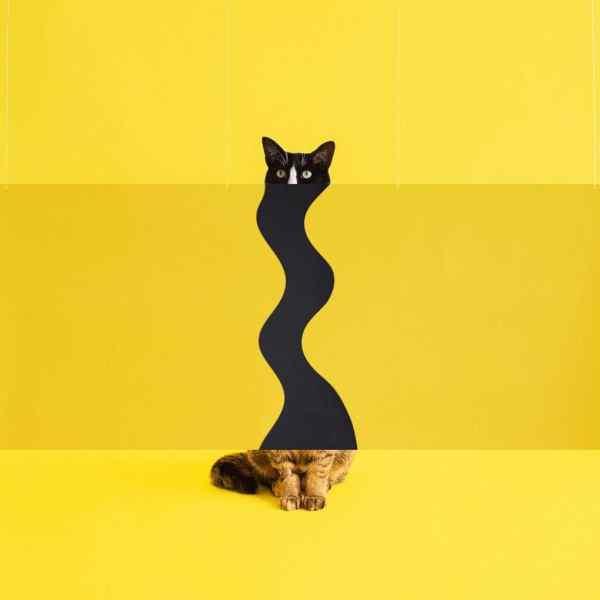 Супер яркий и супер крутой инстаграм кошки - YouLoveIt.ru