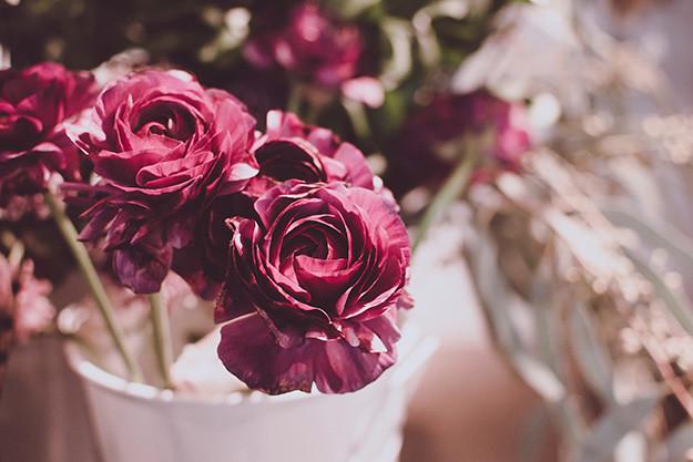 La rose, un trésor de beauté et de bien-être.