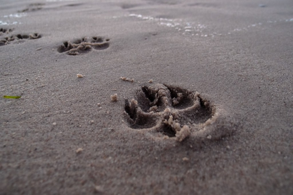 Dog prints in the sand the furry friend tag younfolded blog