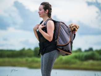 pet magasin backpack pet exercises workouts younfolded blog
