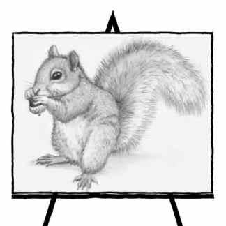 pencil sketch of squirrel