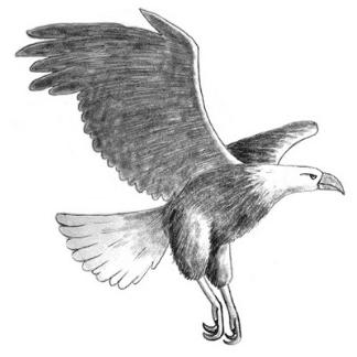 pencil drawn eagle