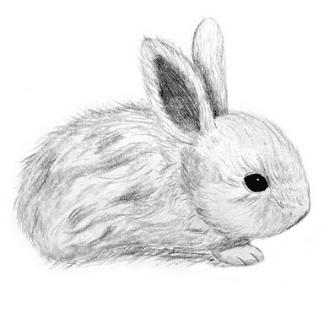 pencil drawn rabbit