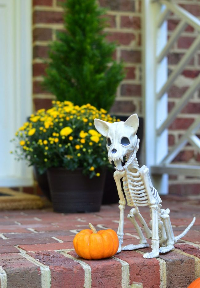 Halloween Porch Chihuahua Dog Skeleton Decor