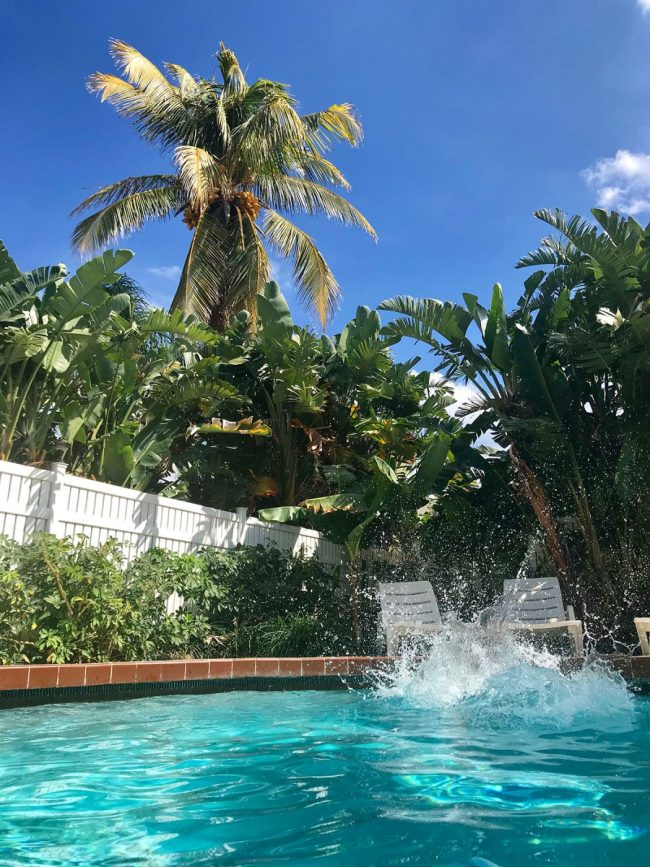 big splash in private pool with large palm tree in background