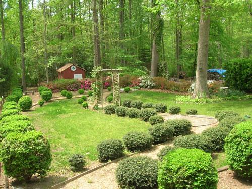 final-backyard-before