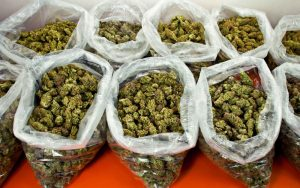 Is weed legal in North Korea? No, but here's a picture of some large bags of weed.