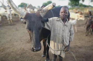 A mundari boy standing proud next to his cow