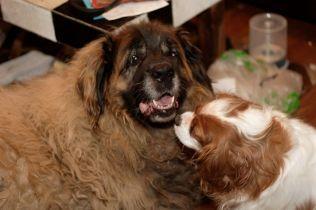 Beau and Hamish