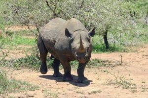 63 Saruni Rhino 300x200 100 Things to do in Kenya