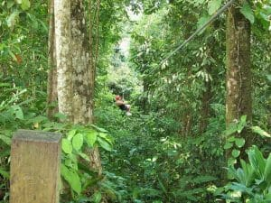 98 Zip lining Kereita 300x225 100 Things to do in Kenya