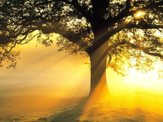 24 Photos of Divine Sunshine to Brighten You Up