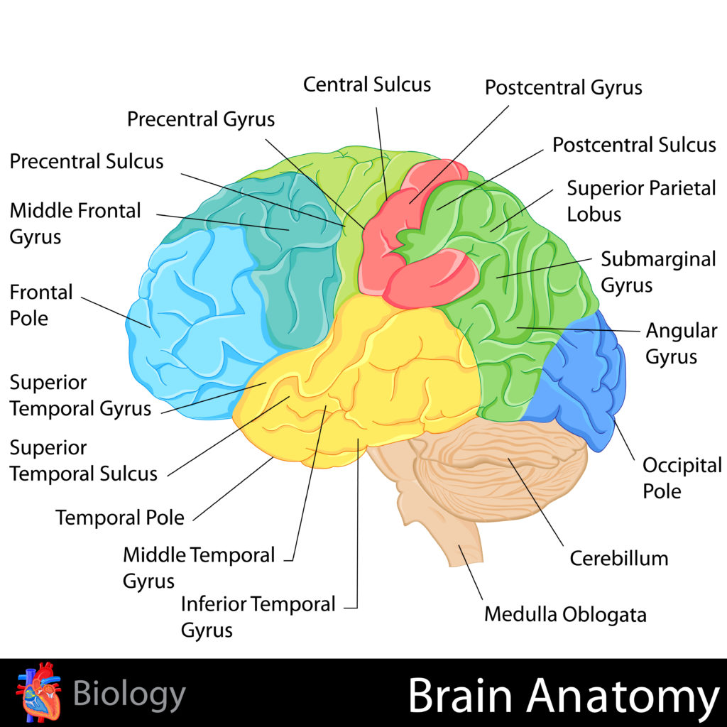 Your Best Mind Using The Science Behind Psychology To