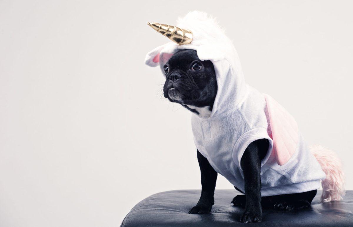 Fantasy and Sci Fi - small black dog in a unicorn costume