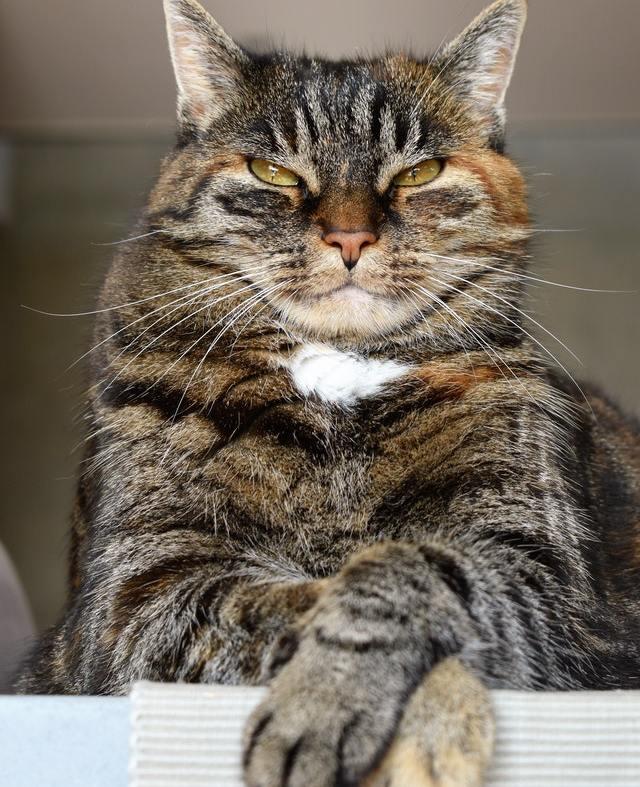 Judgmental tortoiseshell cat