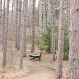 bench in a forest
