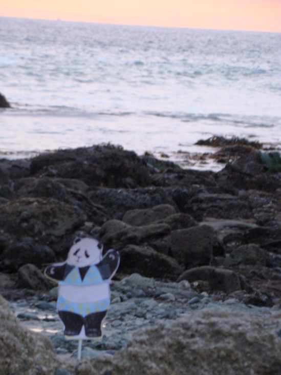 babette in tide pool
