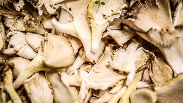 mushrooms_3281618654975210-159532