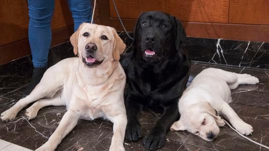 Dogs_Popular_Breeds_46536_78340379_ver1.0_640_360 (1)_1553100792007.jpg.jpg
