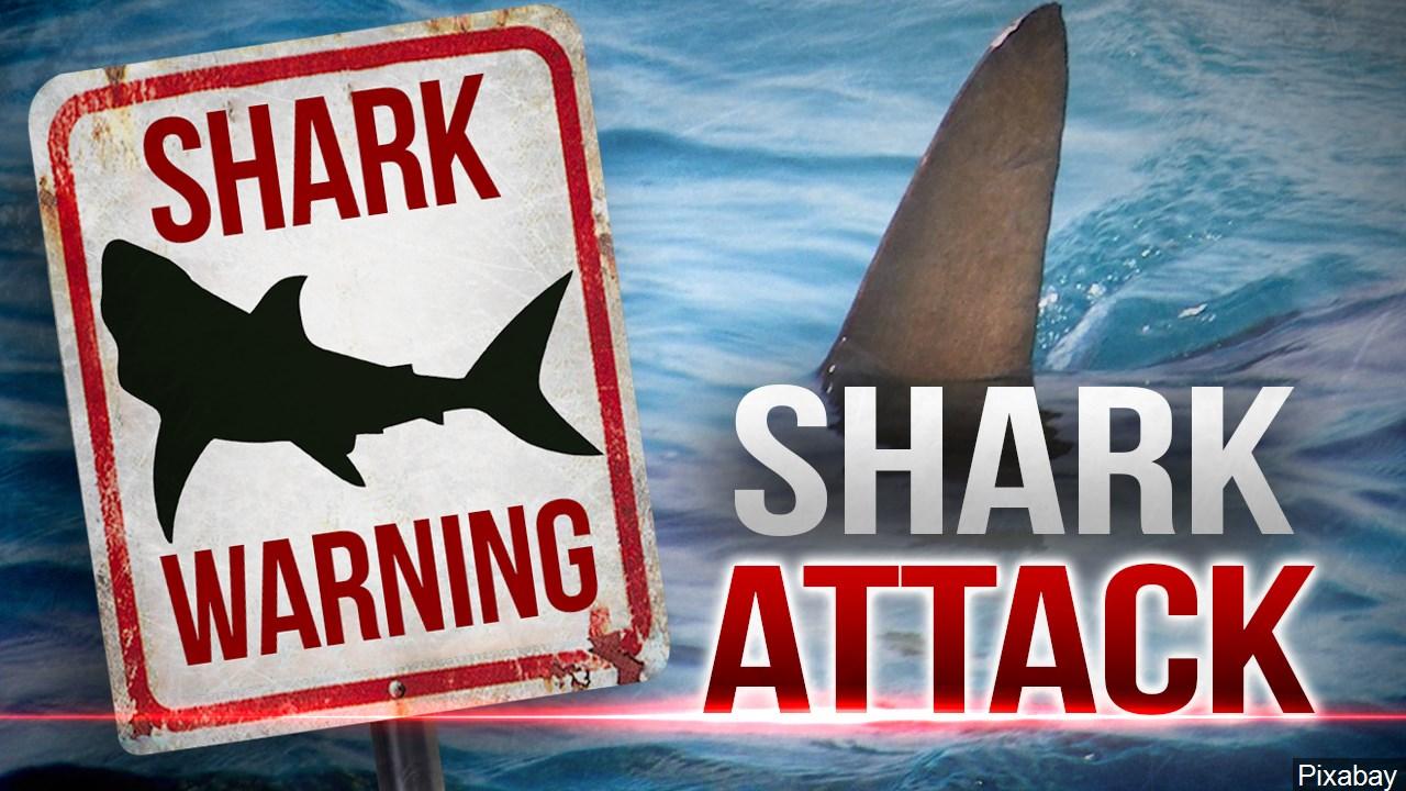 Shark_1556059962851.jpg