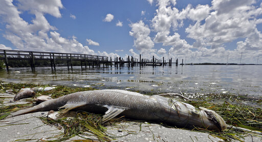 Red Tide, Dead Fish