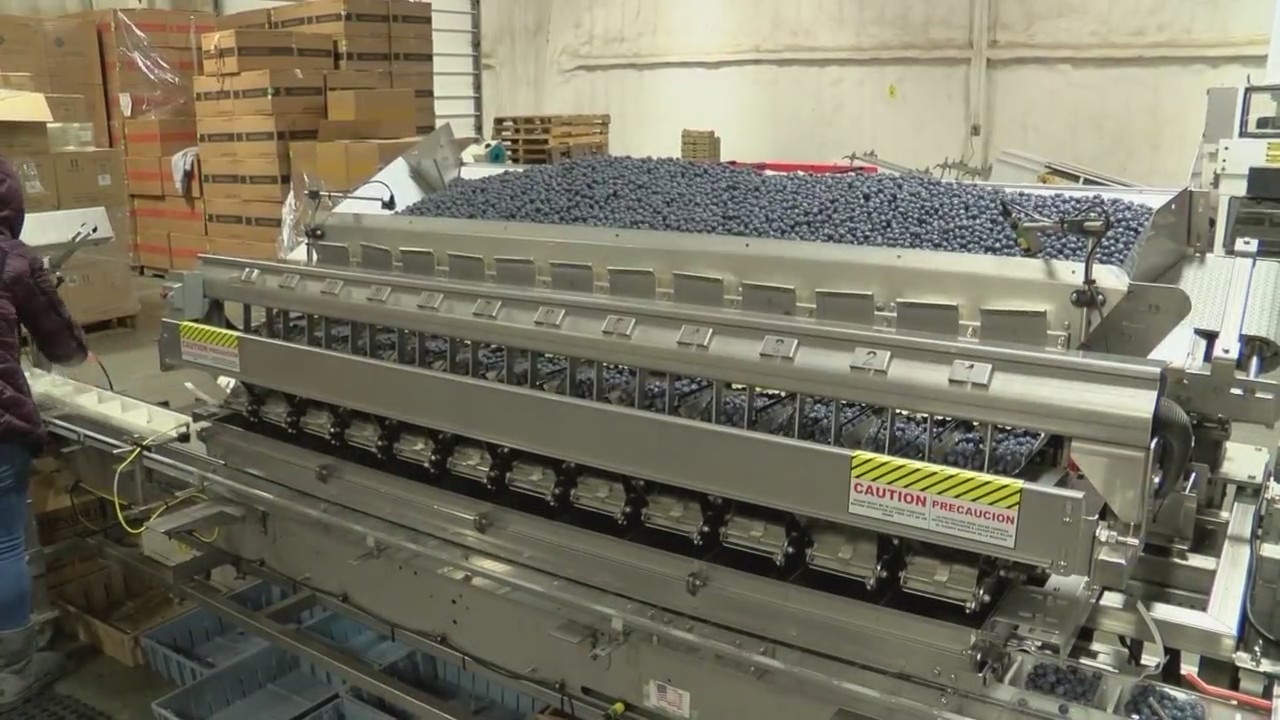 Technology contributes to Valley blueberry crop