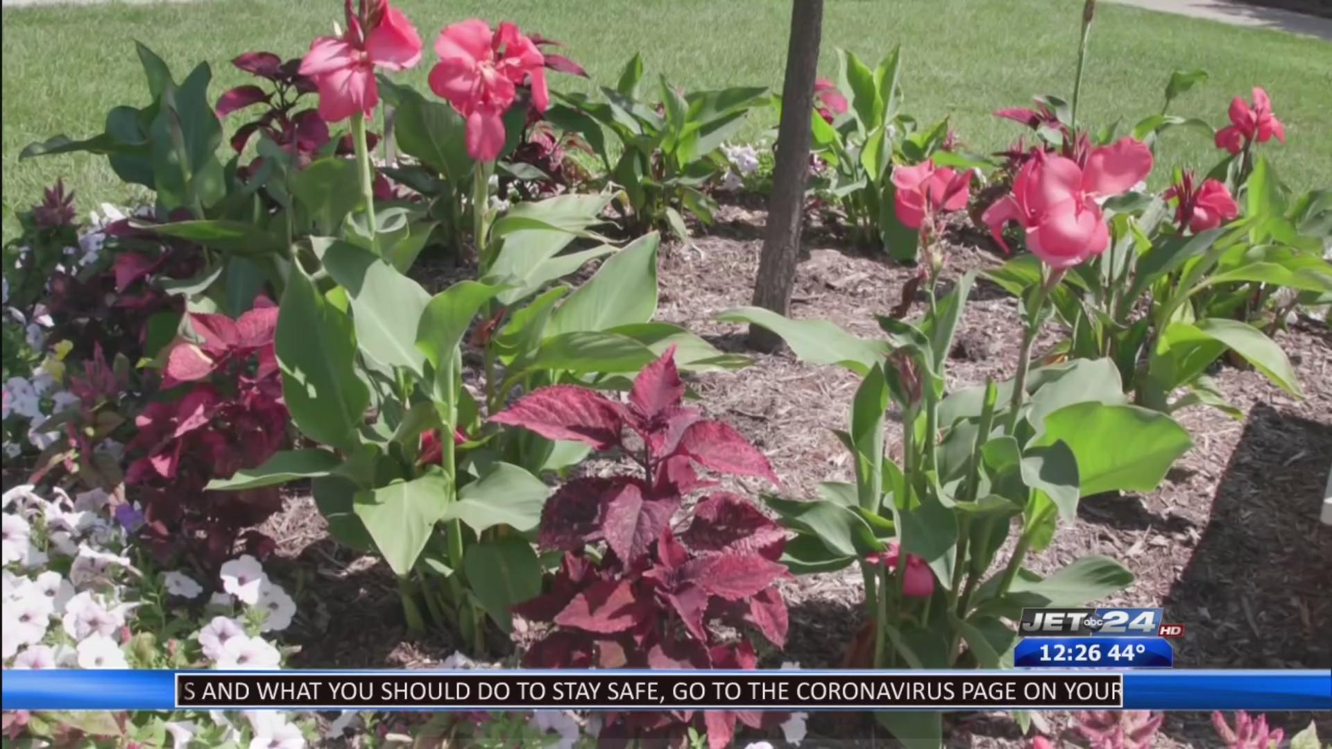 Garden Moments Easy Care Flowers For Arrangements Wjet Wfxp