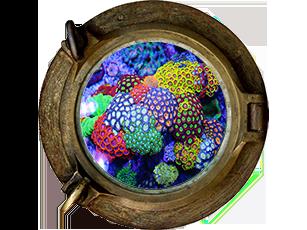 Polyp Coral