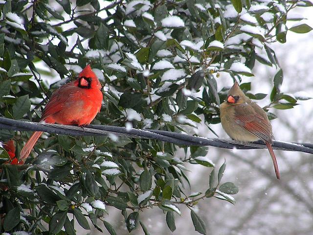 Backyard for bird watchers landscape design on Birds Backyard Landscapes id=44524