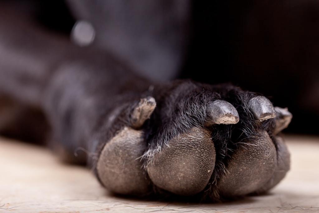 trim dog nails