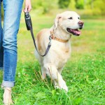 joint health for dogs