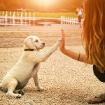 how to make a newly adopted dog feel at home