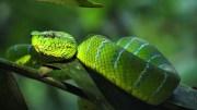Killer Snake & St Patrick