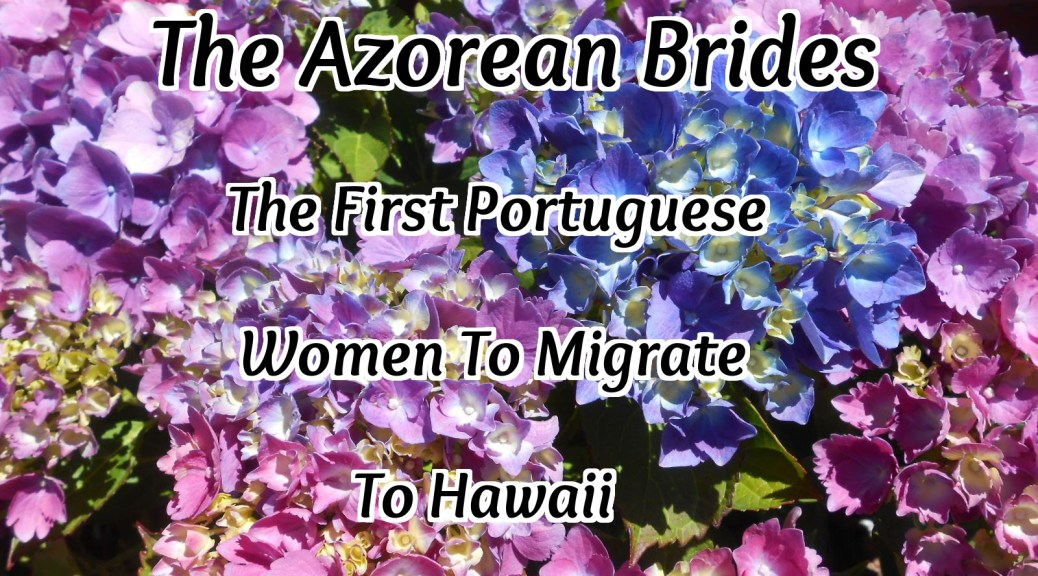 Hydrangea flowers Azorean Brides