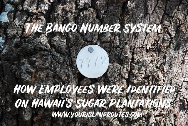 bango identification hawaii