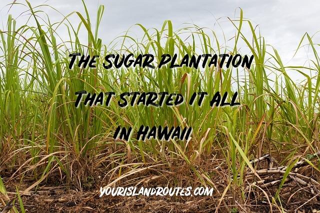 sugar cane koloa plantation history