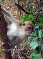 Monkeys are everywhere.
