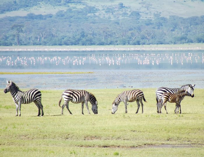 Ngorongoro Crater- Your Next Big Trip