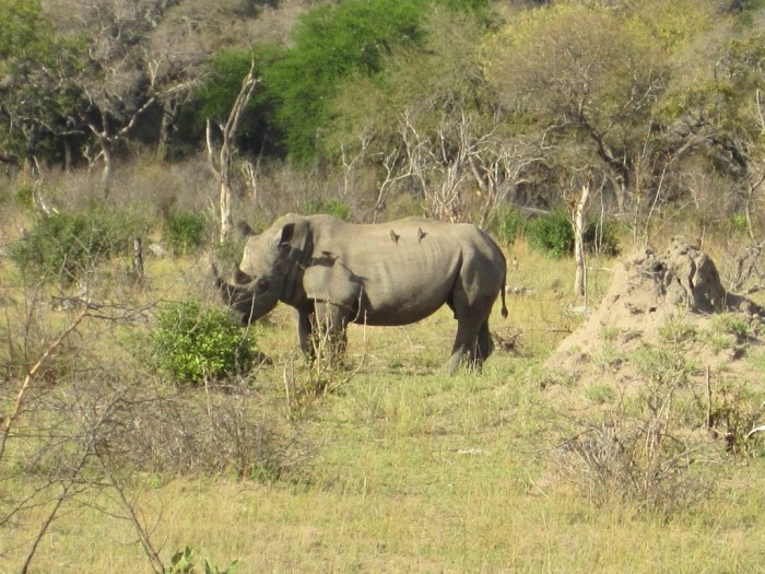Best Places for African Safari