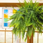 Plants That Improve Air Quality In Your Home