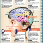 Infographic On Learning Disabilities
