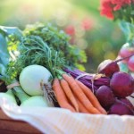 3 Essential Checks To Make Before Growing Your Own Food