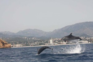 Sierra Helada dolplfins