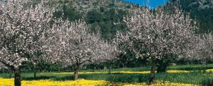 Costa Blanca Almonds