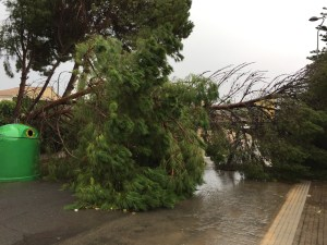 Tree blocking road around the Mar menor during flood and storm