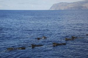 Whale spotting in Spain
